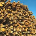 Holzverarbeitende Industrie